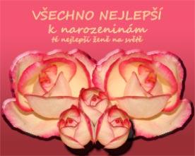 Obrázek růže