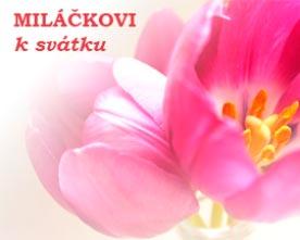 Obrázek růžového tilipánu