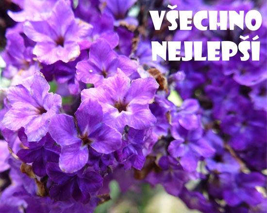 Obrázek modrých květin