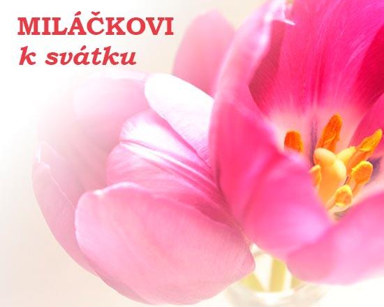 Obrázek s růžovým tulipánem