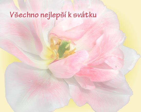 Obrázek rozkveté květiny