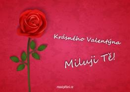 Svatý Valentýn přání  růže