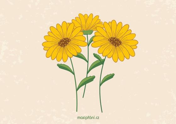 Obrázkové přání k svátku - slunečnice - přední strana
